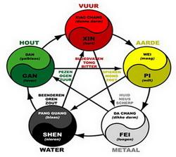 5-elementen-zang-fu-cycli-thumbnail