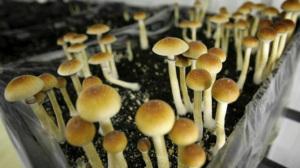 mushrooms25n-1-web_670